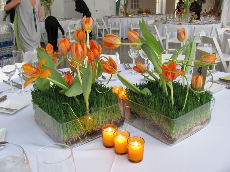 Arching Tulip Centerpiece
