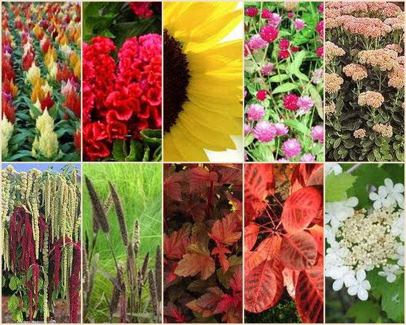 Summertime Illinois Grown Flowers_Scarlet Petal