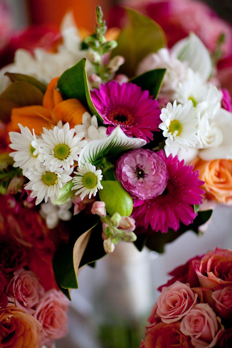 Daisy_scarlet petal